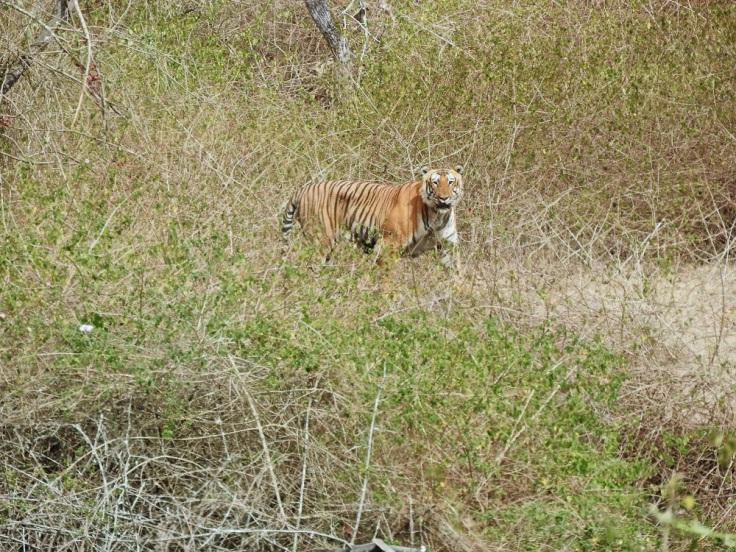 Tiger_habitat_©Somashekar N_CWS